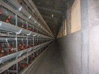 Automatická sběr vajec